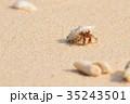 白砂ビーチのオカヤドカリ 35243501