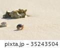 白砂ビーチのオカヤドカリ 35243504