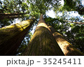 杉 ヒノキ科 大木の写真 35245411