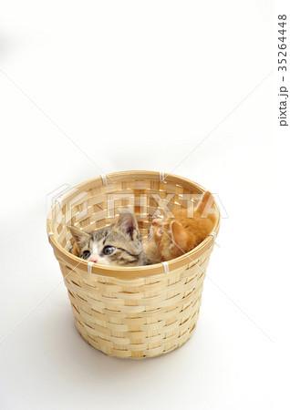 子猫の写真素材 [35264448] - PIXTA