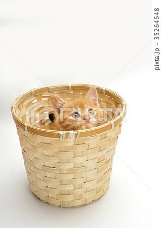 子猫の写真素材 [35264648] - PIXTA