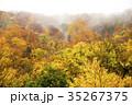 紅葉 風景 木の写真 35267375