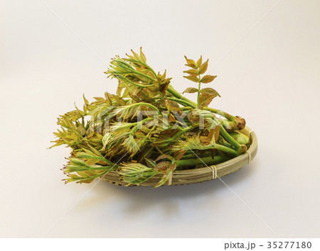 タラの芽 ヌキ 切り抜き 35277180