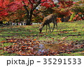 鹿 紅葉 奈良公園の写真 35291533
