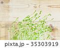 豆苗 発芽 新芽の写真 35303919
