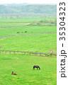 サラブレッド銀座 サラブレッド 馬の写真 35304323