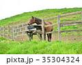 サラブレッド銀座 サラブレッド 馬の写真 35304324