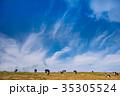 美ヶ原 美ヶ原高原 青空の写真 35305524