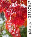 紅葉と初雪 35307917