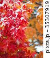 紅葉と初雪 35307919