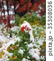 ハマナスの赤い実と初雪 35308036