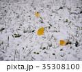イチョウの落ち葉と初雪 35308100