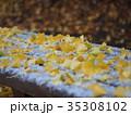 イチョウの落ち葉と初雪 35308102