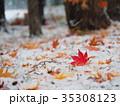 真っ赤なモミジの葉と初雪 35308123