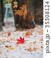 真っ赤なモミジの葉と初雪 35308124