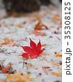 真っ赤なモミジの葉と初雪 35308125