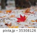 真っ赤なモミジの葉と初雪 35308126