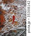紅葉した一枚の葉と初雪 35308142
