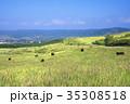 放牧牛 -阿蘇山登山中の風景- 35308518