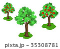 グリーン 緑 緑色のイラスト 35308781