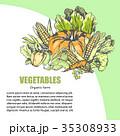 ベジタブル 野菜 盛り合わせのイラスト 35308933