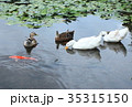 池のなかまたち 35315150