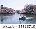 桜 井の頭公園 池の写真 35316715
