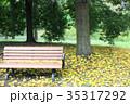 ベンチ 銀杏 秋の写真 35317292