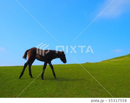岬の野生馬 35317558