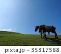串間市 都井岬 野生馬の写真 35317588