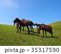 串間市 都井岬 野生馬の写真 35317590