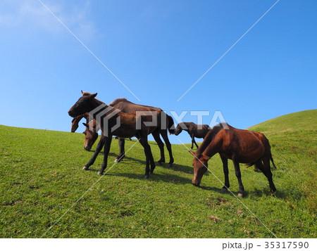 岬の野生馬 35317590