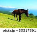 都井岬 馬 野生馬の写真 35317691