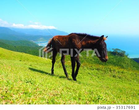 岬の野生馬 35317691