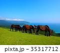 串間市 都井岬 馬の写真 35317712