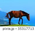 串間市 都井岬 馬の写真 35317713