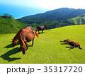 都井岬 馬 野生馬の写真 35317720