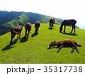都井岬 岬 馬の写真 35317738