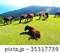 都井岬 岬 馬の写真 35317739