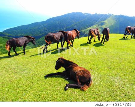 岬の野生馬 35317739