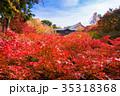 東福寺 紅葉 京都の写真 35318368