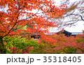 東福寺 紅葉 京都の写真 35318405
