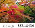 東福寺 紅葉 京都の写真 35318439