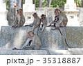 さる サル 猿の写真 35318887