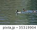 鳥 水鳥 野鳥の写真 35319904