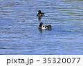 鳥 水鳥 野鳥の写真 35320077