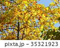 秋 黄葉 植物の写真 35321923