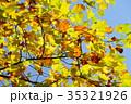 秋 黄葉 紅葉の写真 35321926