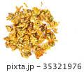 菊科 キク 菊の写真 35321976