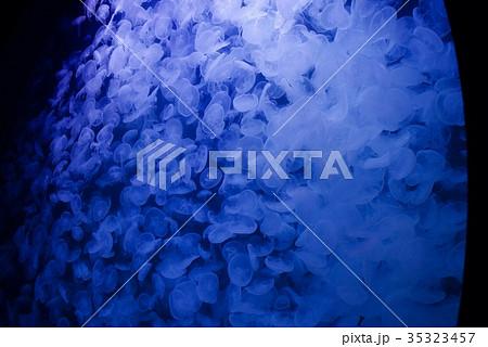 クラゲ展示数でギネスブックに認定の鶴岡市立加茂水族館のクラゲドリーム館 35323457